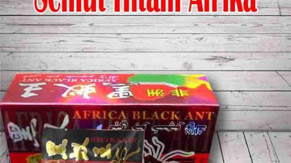 Testi Pemakaian Ramuan Kuat Africa Black Ant