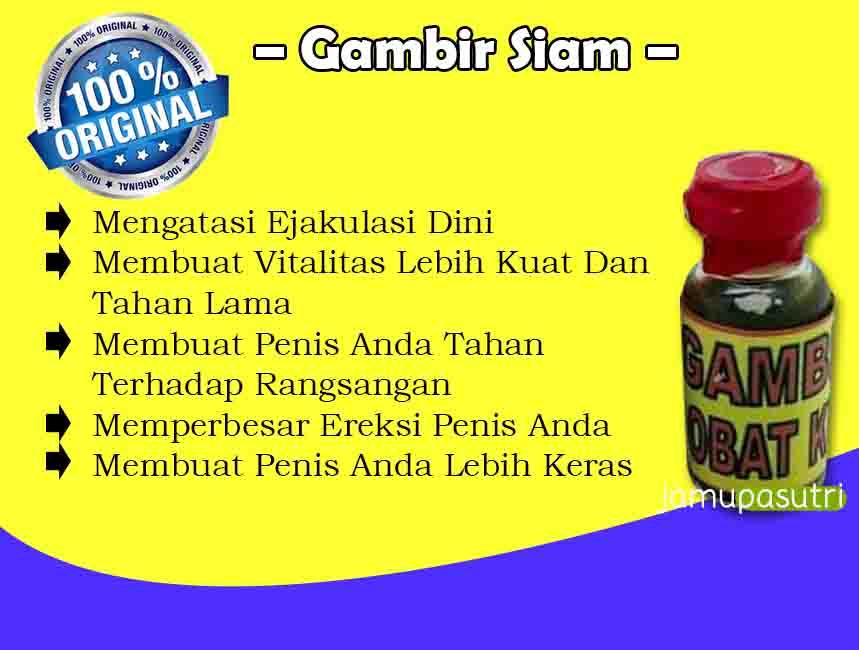 Distributor Gambir Siam Di Bali