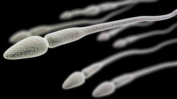 Harga Penyubur Sperma Numen Z