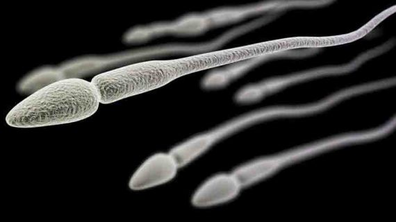 Numen Z Obat Penyubur Sperma Yang Paling Bagus