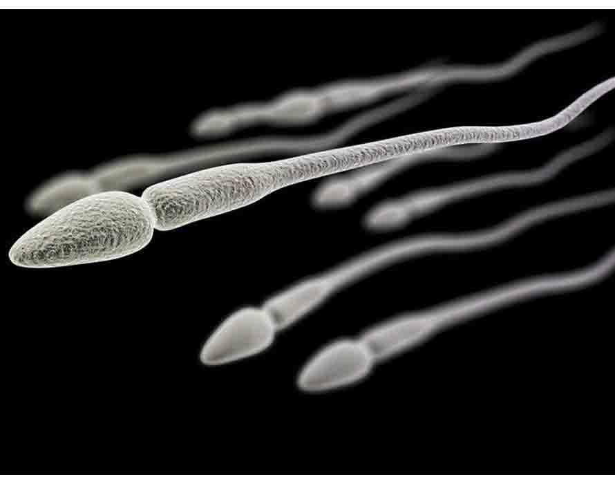 Numen Z Obat Herbal Penyubur Sperma Terbaik