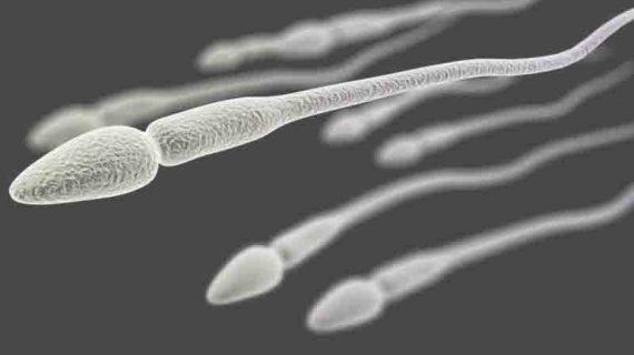 Numen Z Suplemen Penyubur Sperma Pria