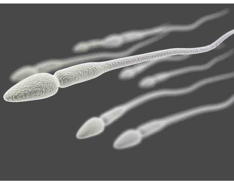 Numen Z Ramuan Penyubur Sperma Alami